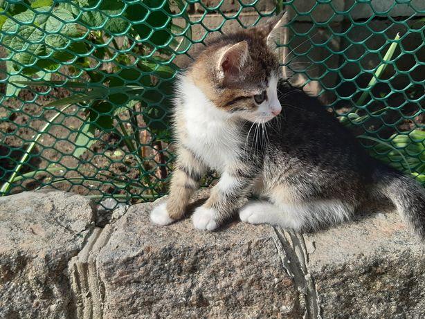 Котёнок мальчик ищет дом!