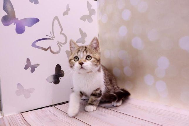 Котёнок красивый