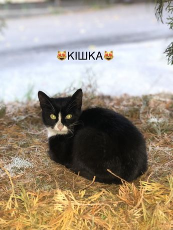 В добрые руки. Черный кот. Черная с белым кошка. Отдам даром.