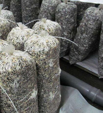 Изготовление грибных блоков+инкубатор+грибница(800кв. м)