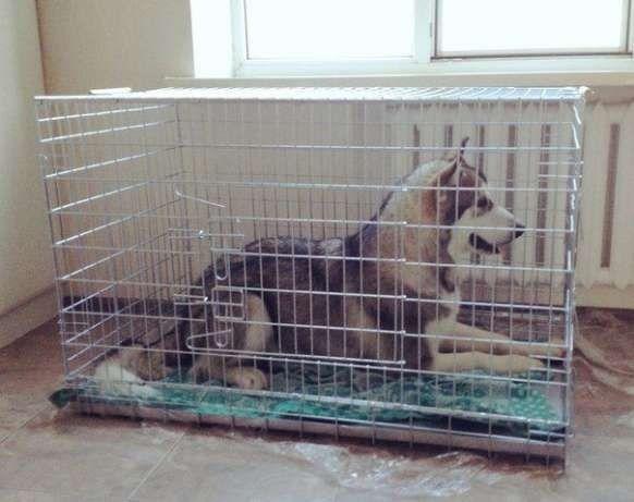 Усиленная клетка, переноска, вольер для собак волк-2 №6, 107х70х80h см