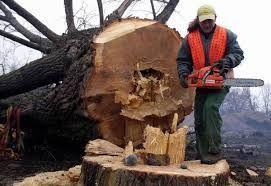 Wycinka podcinka drzew, czyszczenie działek, CZĘSTOCHOWA