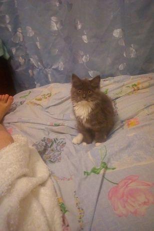 Потерялась кошка на Совхозной