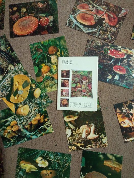 """Набор открыток """"Грибы"""" (25 шт с описанием) Попасная - изображение 1"""