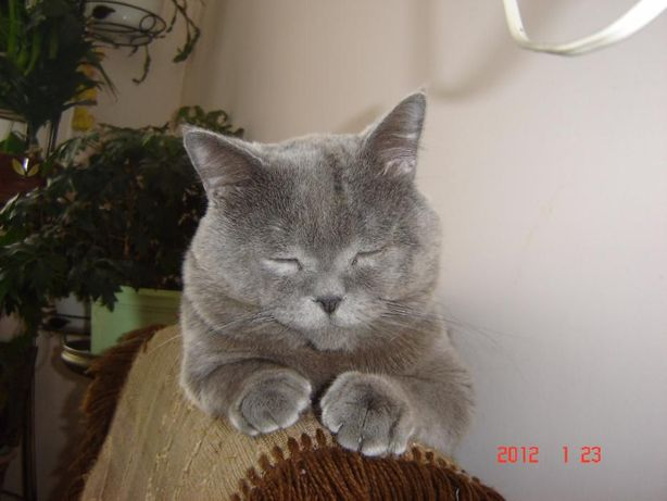 Пропоную кота на вязку