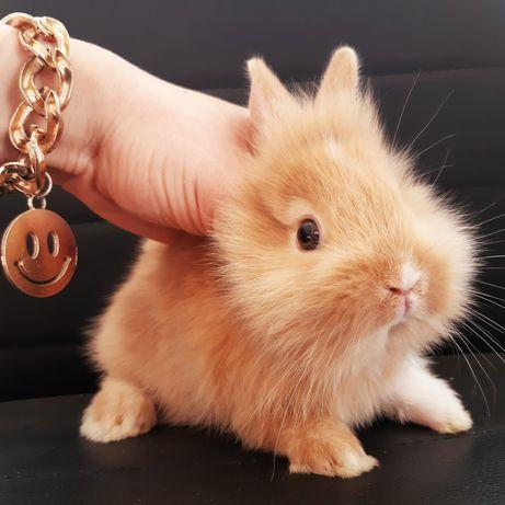 Карликовые миниатюрные декорпт.торчеухие и вислоухие кролики и клетки