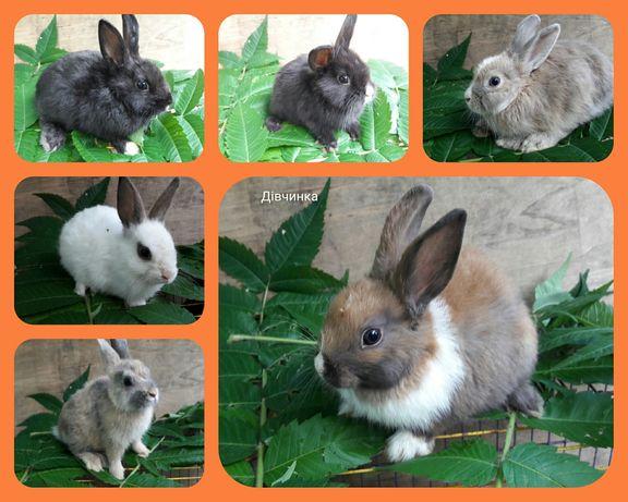 Декоративні,карликові кролики