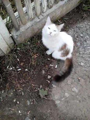 Молоденький пушистый котик