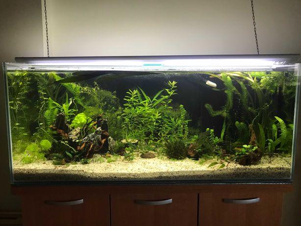 Sprzedam nadwyżkę roślin z mojego akwarium