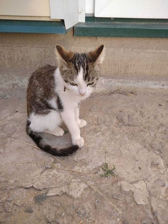 Пропал кот с черно-коричневыми пятнами, помогите найти!