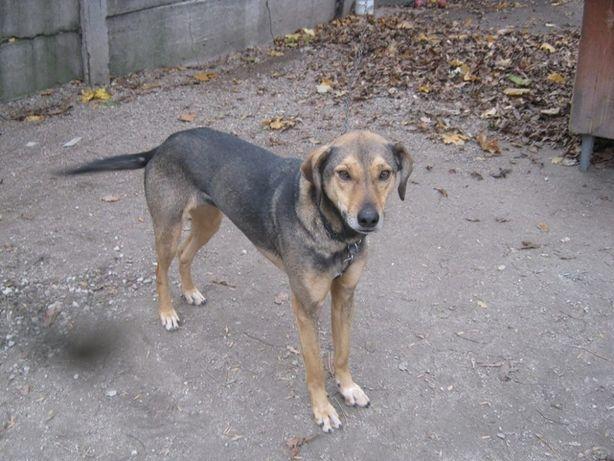Молодая,стерилизованная собака ищет дом