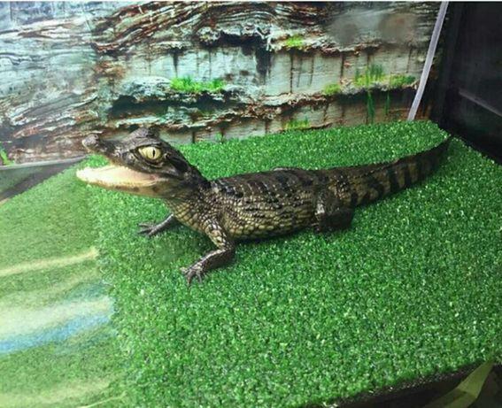 Рептилия : искусственнаяа трава, разные куски. Доставка по Украине.