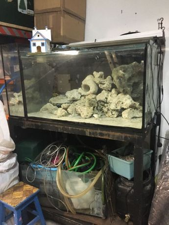 Aquário água salgada+Samp