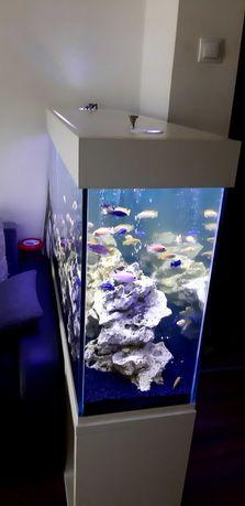 akwarium + wyposażenie