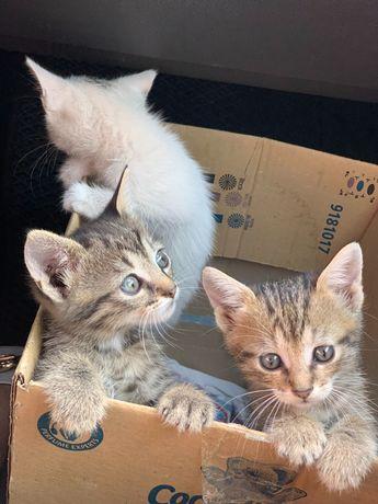 Кошенята шукають господаря!!