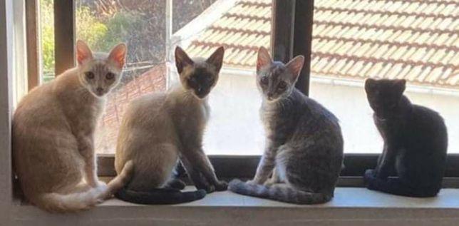 Gatos de 6 meses