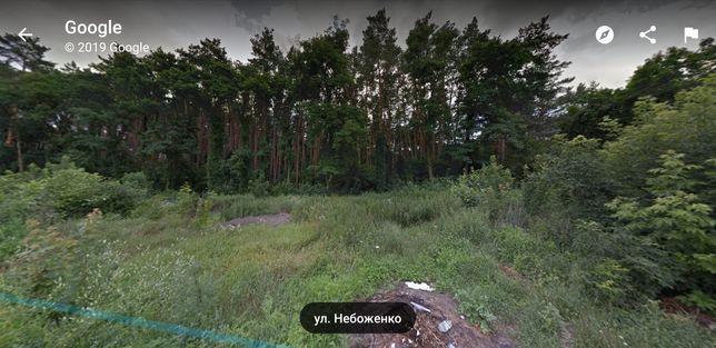 Участок около соснового леса!