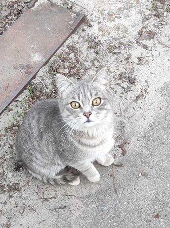 Очаровательный котенок-подросток в добрые руки