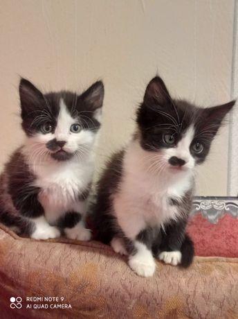 Котята мышеловы (мальчик и девочка)