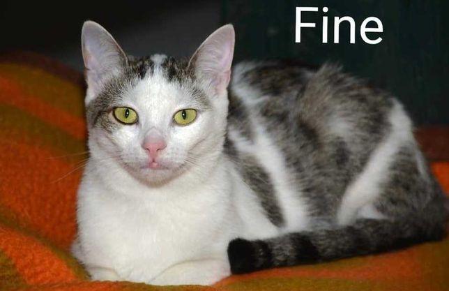 Fine - wspaniała kotka, pomimo choroby, szuka domu