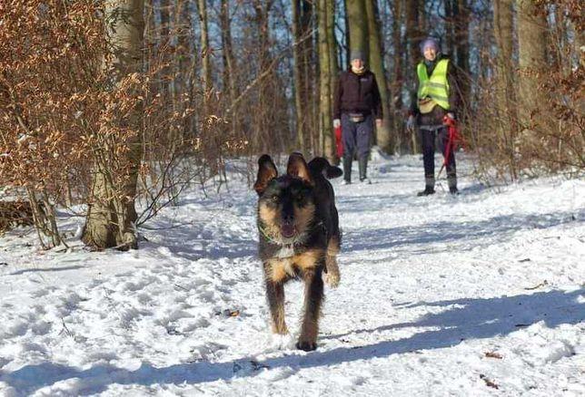 Super psiak Oli szuka domu!