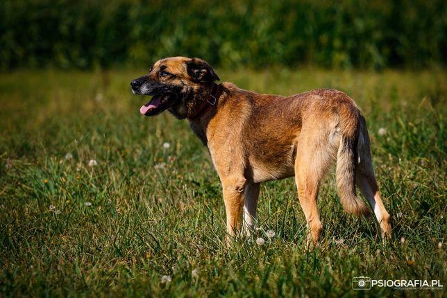 Idealny pies na długie spokojne spacery i wieczory na kanapie