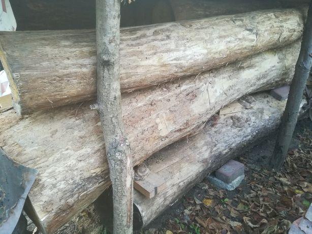 Drzewo dąb bale