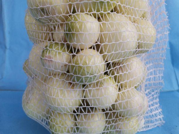 Sprzedam cebulę obraną na biało