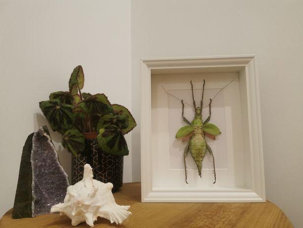 Insecto pau real