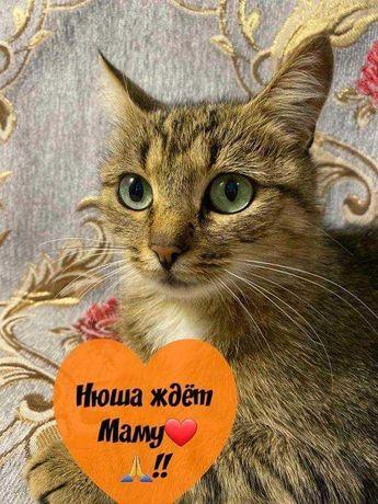 Тигровая кошечка Нюша ищет любящее сердце!!