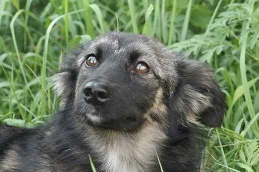 Невелика пухнаста Міла, ласкава собака