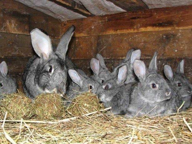Ищу партнеров для кролико и птицеводства