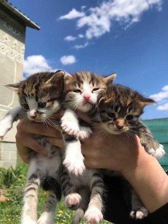 коти, котики, кошенятя