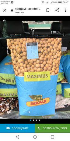 Посевная соя на посев Максус