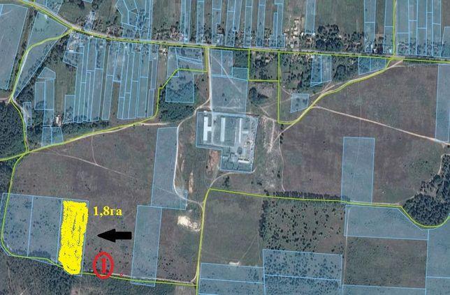Продається три земельні ділянки с. Соснівка, (70 км. від Києва)