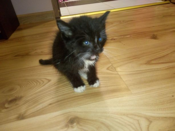 Oddam kotka małego