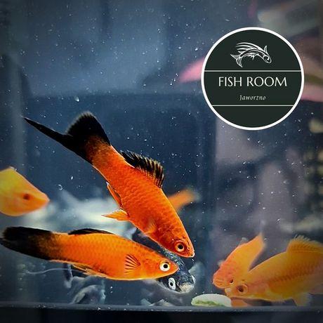 Mieczyk (Fish Room Jaworzno)