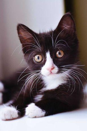 Котенок-непоседа Элвис ждет добрых родителей!