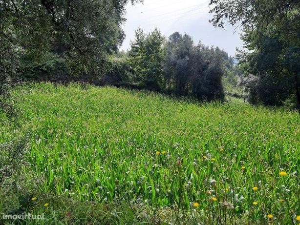 Terreno Agrícola - Valdosende