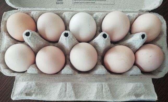 Sprzedam jajka z gospodarstwa