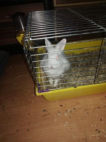Słodki,mięciusi królik
