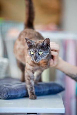 Женева - кошка удивительного окраса