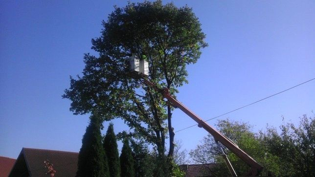 Wycinka drzew przycinka drzew wynajem i usługi zwyżką usługi rębakiem