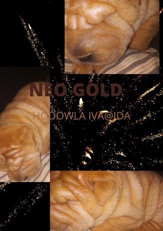 SHAR PEI-Neo Gold miot N