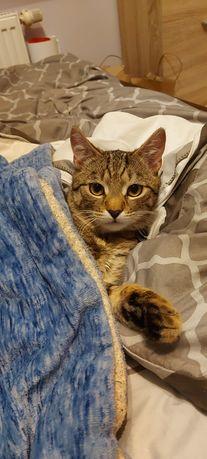Zaginął kotek - wczoraj Krasnobród