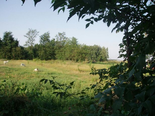 Продам участок в селе Черняховка, 97 км от Киева