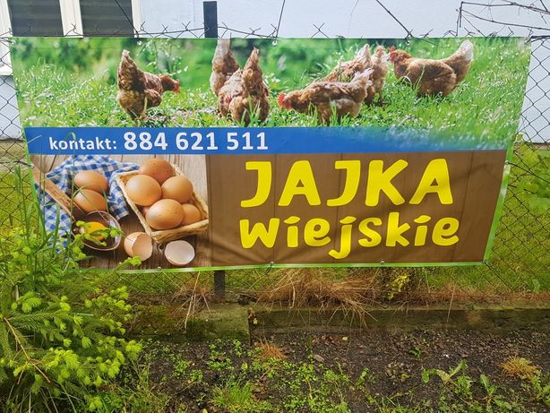 Jajka z ekologiczne