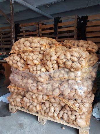 Ziemniaki Tajfun Owacja Bellaroza Denar transport,faktura