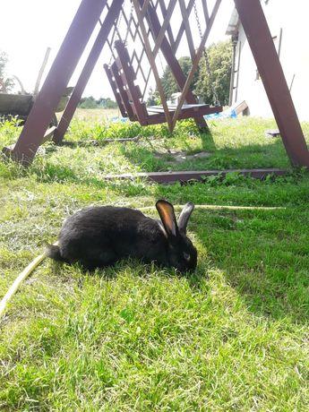 Продати кролики