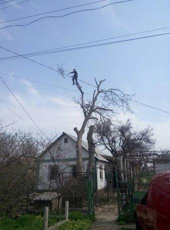 Диагностика состояния , подрезка и спил деревьев.